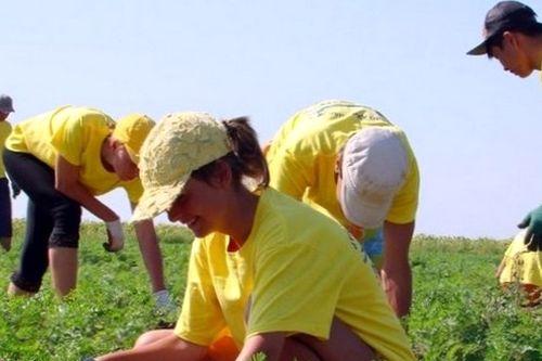 Работа для студентов летом за границей
